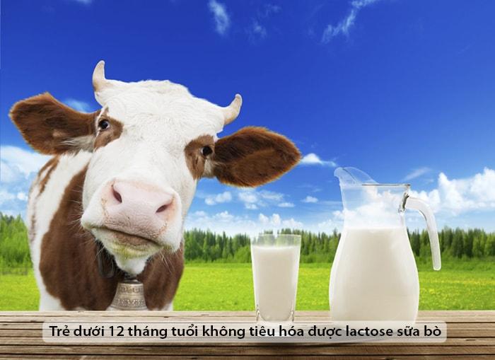 Trẻ dưới 12 tháng tuổi không tiêu hóa được lactose sữa bò
