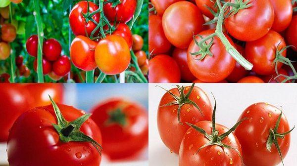 Trẻ mấy tháng ăn được cà chua