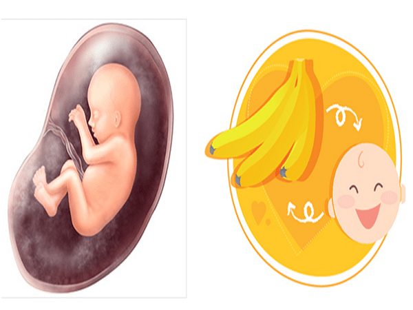 Sự phát triển của thai nhi qua các mốc quan trọng 5