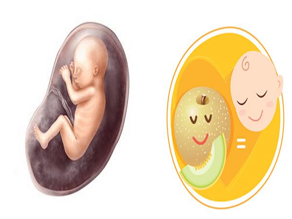 Sự phát triển của thai nhi qua các mốc quan trọng 6