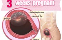 Sự phát triển của thai nhi 3 tuần tuổi như thế nào?