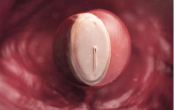 Thai nhi 4 tuần tuổi - Bước khởi đầu của chu kỳ phát triển phôi thai