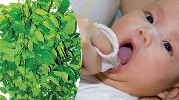 Có nên sử dụng rau ngót để chữa tưa lưỡi cho trẻ sơ sinh?
