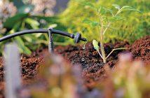 Nguyên lý tưới nhỏ giọt và ưu nhược điểm trong trồng rau thủy canh
