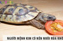 Mệnh Kim có nên nuôi rùa không?