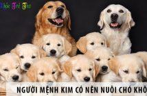 Người mệnh Kim có nên nuôi chó không?