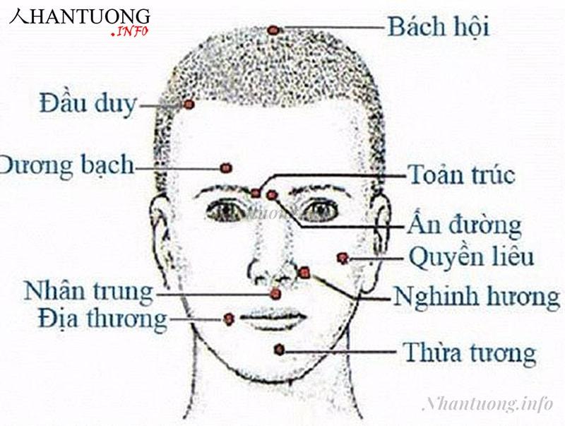Các thành phần trên khuôn mặt