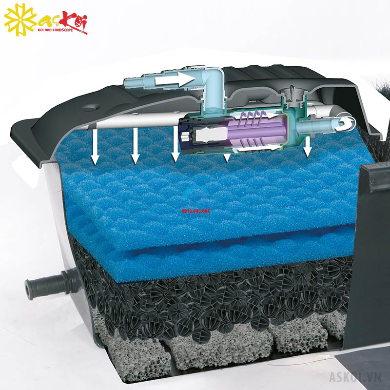 Mô hình hệ thống lọc sử dụng lọc thùng bên ngoài hồ cá Koi