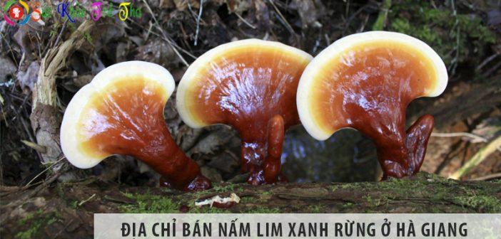 Địa chỉ bán nấm lim xanh rừng tự nhiên tại tỉnh Hà Giang