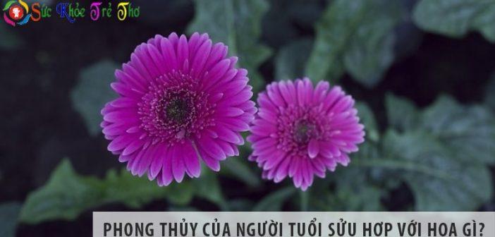 Phong thủy của người tuổi Sửu hợp với hoa gì?